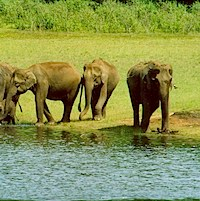 Wildlife & Culture trail in Kerala