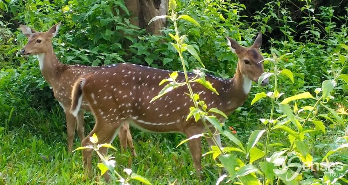 Wildlife Trail in Chennai