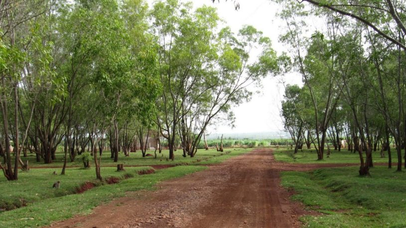Hesaraghatta Grasslands is a great escape from Bangalore