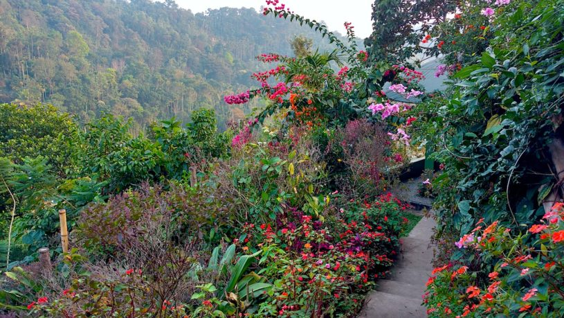 Ecology and culture tour to Munnar