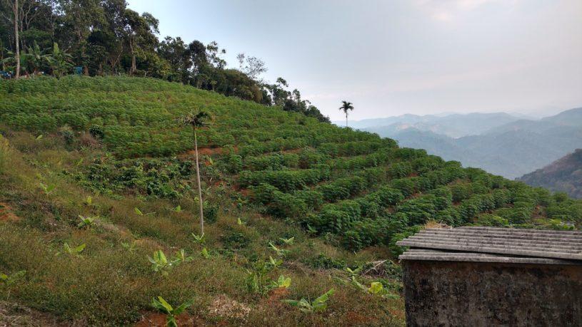 Spice tour Kerala