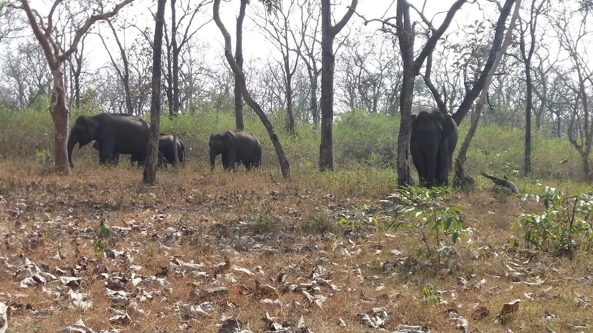Wild life diary- Kerala